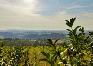 Eko vinograd